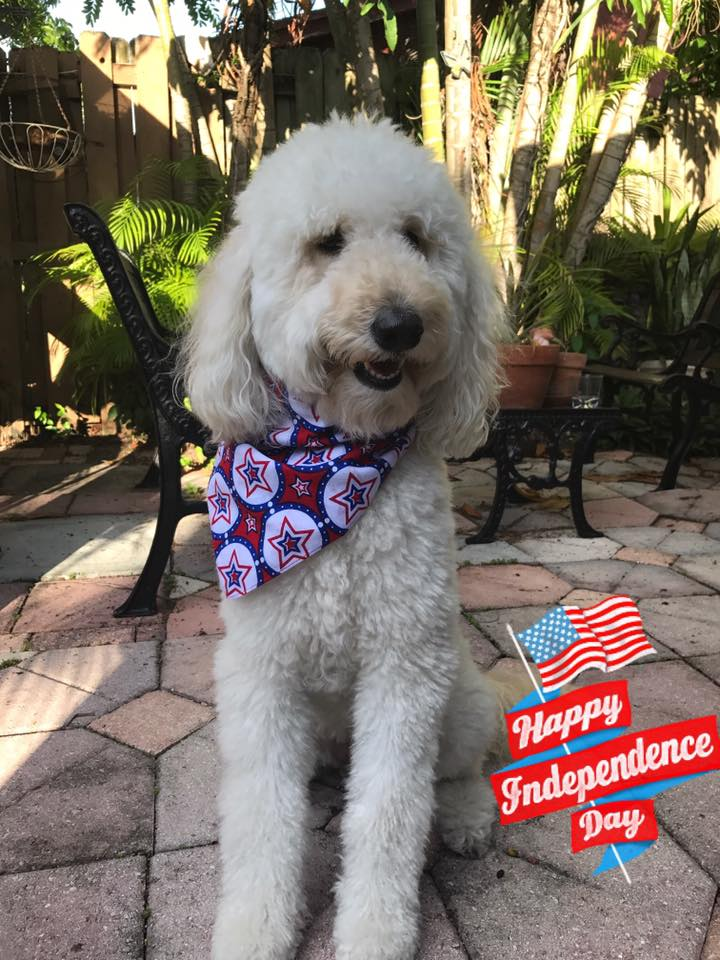 Affordable West Palm Beach Goldendoodle Puppies - Glamour